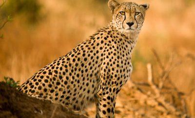 Region – Kruger National Park